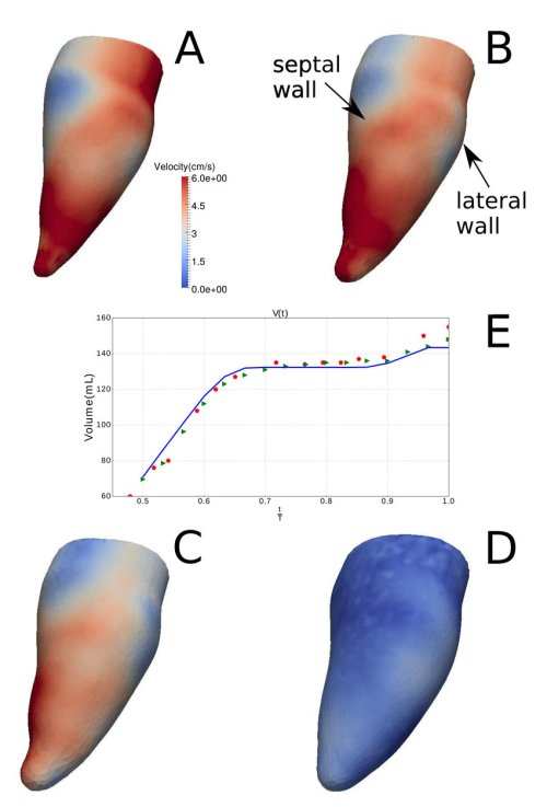 small resolution of velocity magnitude distribution on the endocardium during diastole at download scientific diagram