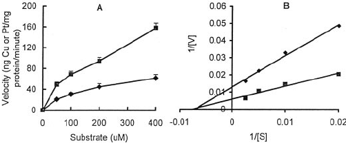 Copper (A) and platinum (B) accumulation in the whole cell