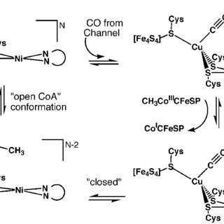 Simplistic mechanistic proposal for acetyl-CoA synthase