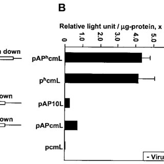 (PDF) Novel Baculovirus DNA Elements Strongly Stimulate