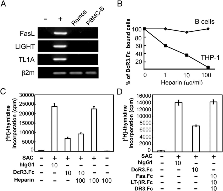 The antiproliferation activity of DcR3 is not related to