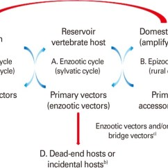 Basic Virus Diagram Real Number System Vertebrate Host And Vector Transmission Cycles. (a) Enzootic Cycle... | Download Scientific