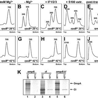 (PDF) Translation initiation with 70S ribosomes: An