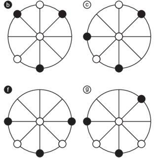 (PDF) The loop within circular three men's morris