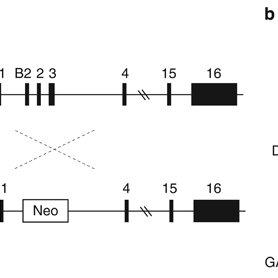 (PDF) Abnormal behavior in mice mutant for the Disc1