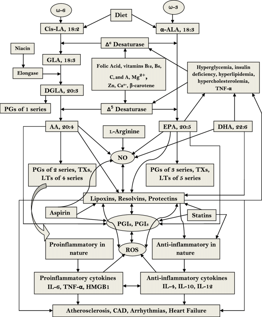 Metabolism of essential fatty acids and their modulation