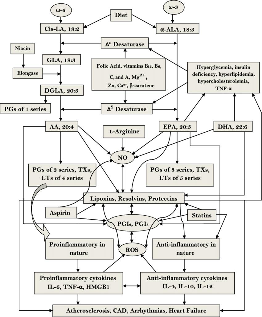 Metabolism of essential fatty acids and their modulation