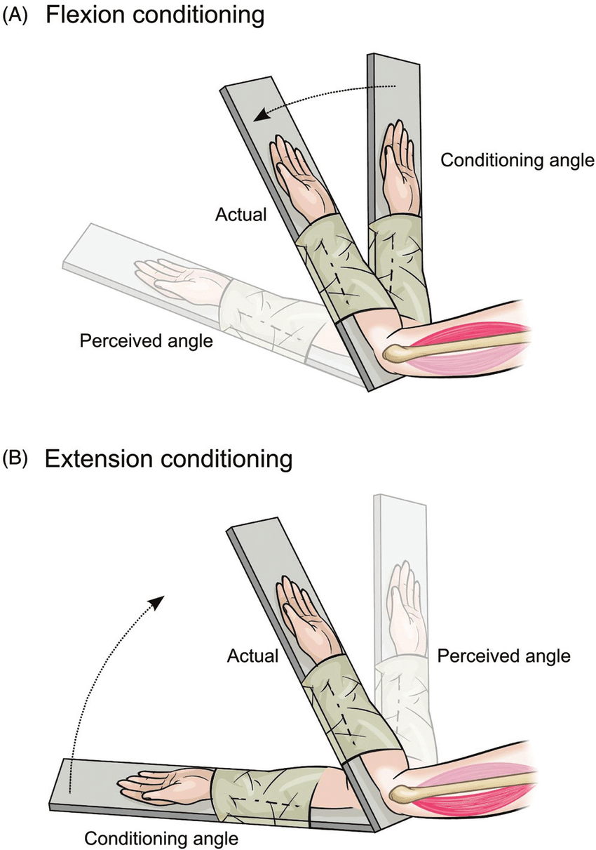 medium resolution of  a flexion conditioning of elbow muscles the blindfolded