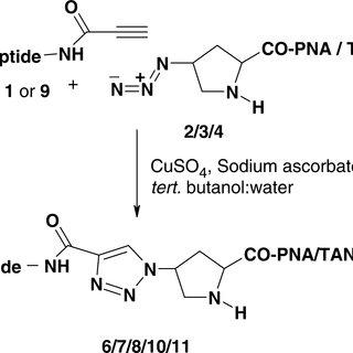 Scheme 4. DNA–alkyne conjugation with 4-azidoprolyl