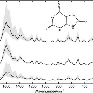 SERS spectra of uric acid solutions obtained by using Lee