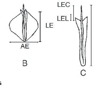 Variables anatómicas evaluadas en hojas y ramillas: A