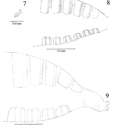 myrciariamyia admirabilis maia sp nov 7 male foretarsal claw and empodium [ 850 x 981 Pixel ]
