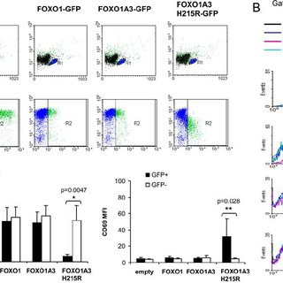 (PDF) FOXO1 Regulates L-Selectin and a Network of Human T