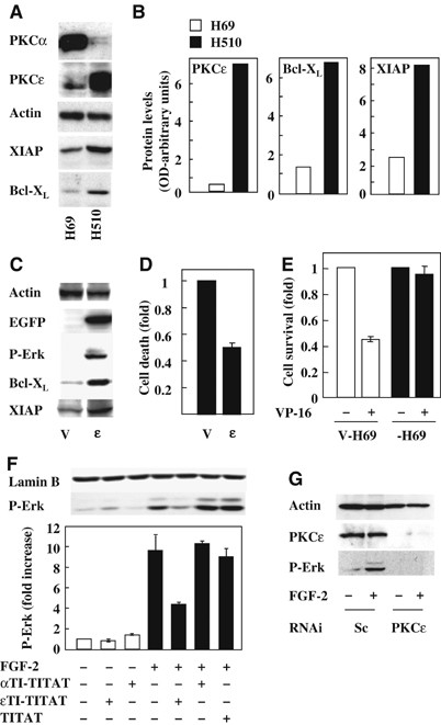 PKCε levels correlate with XIAP and Bcl-XL expression and