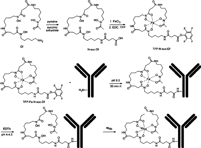 Df-conjugation via TFP-N-suc-Df-Fe and labeling with 90 Nb