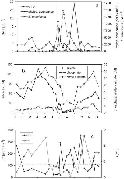 Annual phytoplankton dynamics and the main modulating