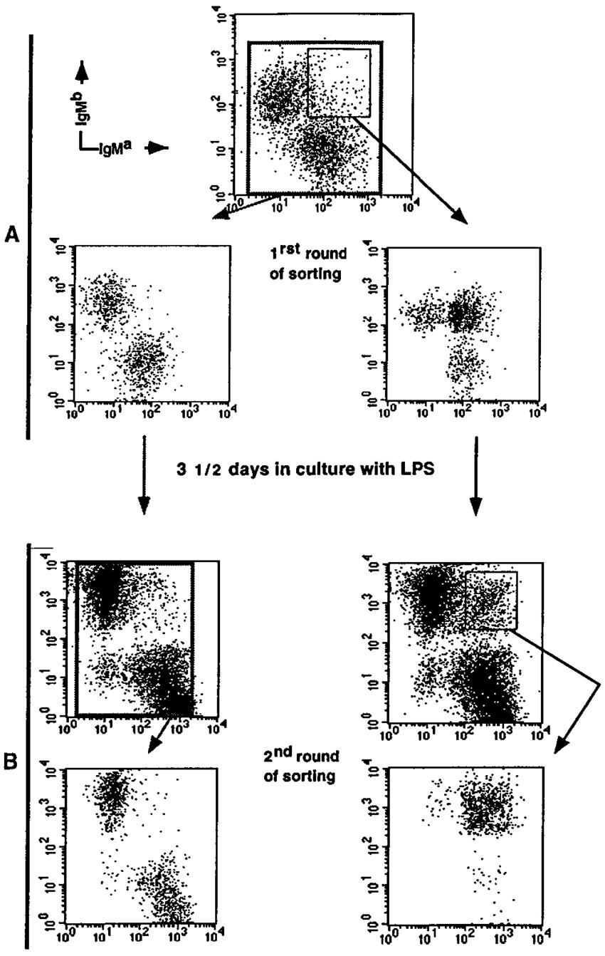 Double sorting procedure for DE enrichment. FACS profiles