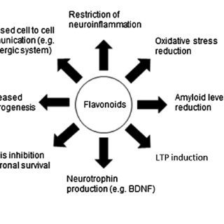 (PDF) Phytochemicals and cognitive health: Are flavonoids
