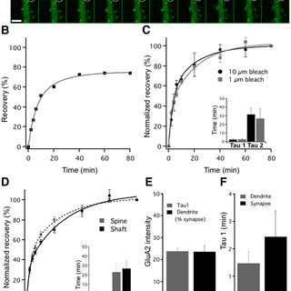 Measuring synaptic AMPAR removal with PAGFP-GluA2. A