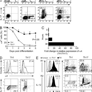(PDF) Th17 lymphocytes traffic to the central nervous