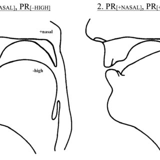 (PDF) Cognitive Phonetics: The Transduction of Distinctive