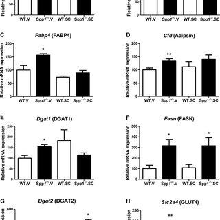 (PDF) Osteopontin-deficient progenitor cells display