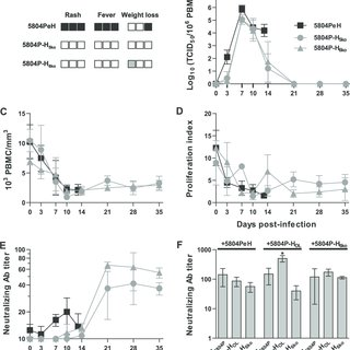 (PDF) Canine Distemper Viruses Expressing a Hemagglutinin