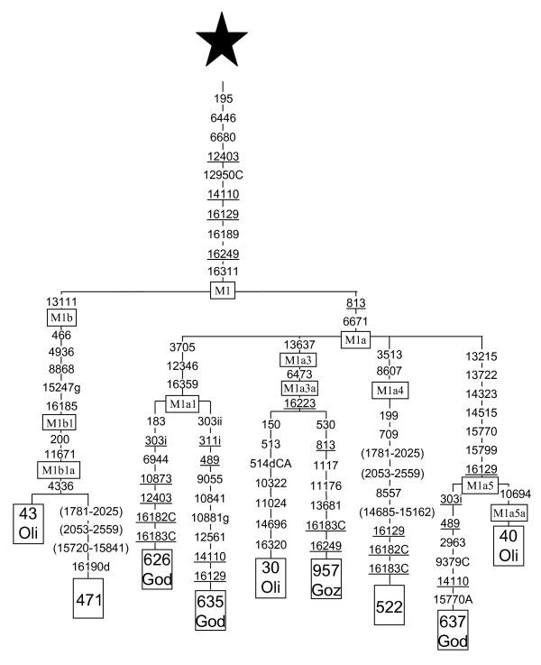 Mitochondrial DNA structure in the Arabian Peninsula (PDF