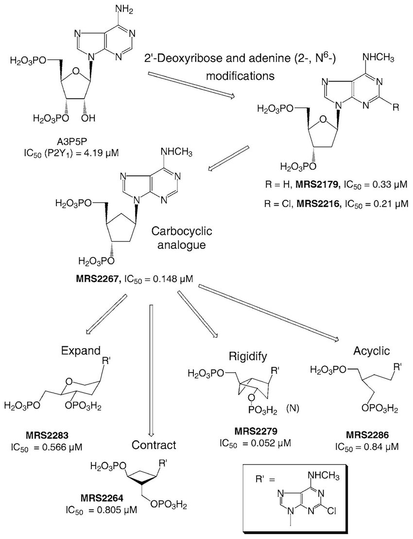 medium resolution of structural modifcations of the nucleoside moiety of nucleotide ligands download scientific diagram
