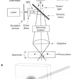 confocal schematic a block diagram of the optical components of a [ 786 x 1356 Pixel ]