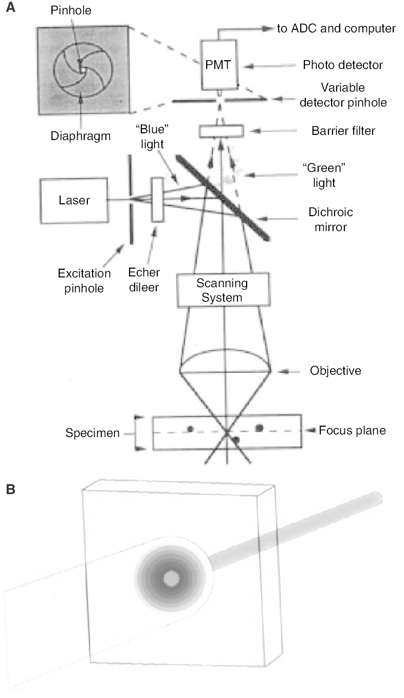medium resolution of confocal schematic a block diagram of the optical components of a