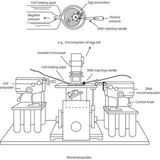 9 Method of microinjection. Micromanipulator and