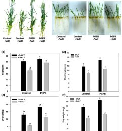 effect of pgpr inoculation on wheat plant growth under non saline and saline conditions  [ 850 x 1008 Pixel ]