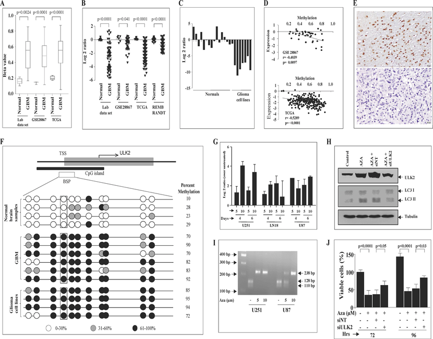 ULK2 is methylation silenced in GBM. A, beta values of