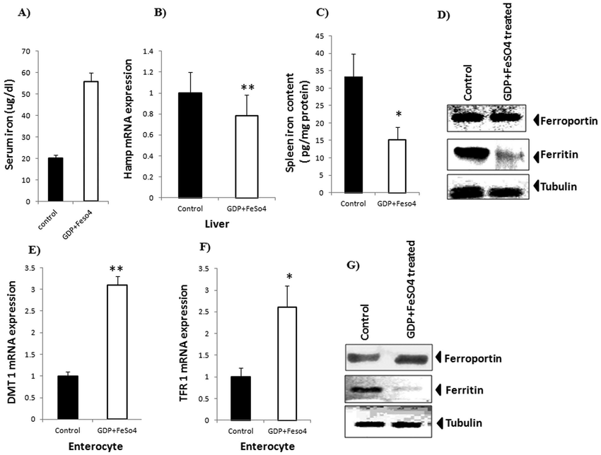 Effect of GDP + FeSO 4 in response to normal body iron