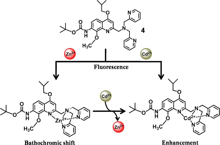 Differential fluorescent behavior of probe 4 toward Zn 2