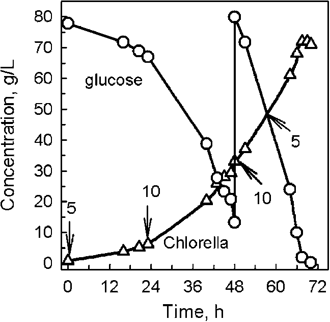 Time course of Chlorella sp. dry mass and glucose