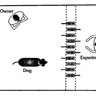 (PDF) Dog-Human Relationship Affects Problem Solving