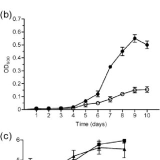 Analysis of recombinant protein obtained by expression of