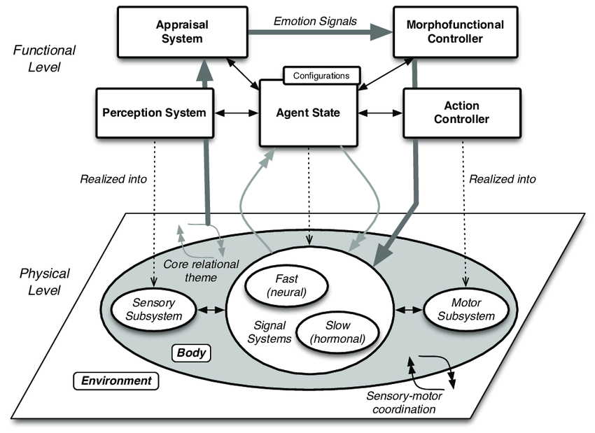 A block diagram of the elements in the morphofunctional
