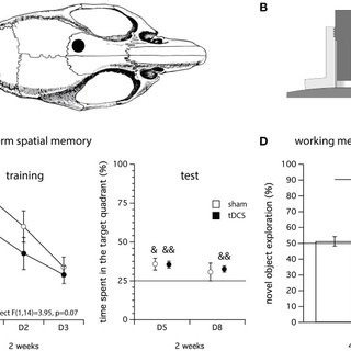 (PDF) Transcranial direct current stimulation for memory