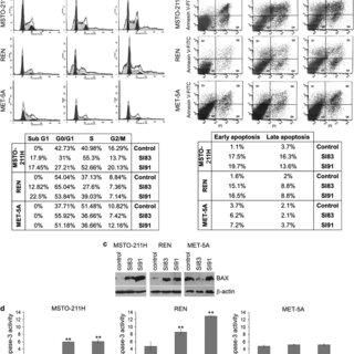(PDF) New pyrazolo[3,4-d]pyrimidine SRC inhibitors induce