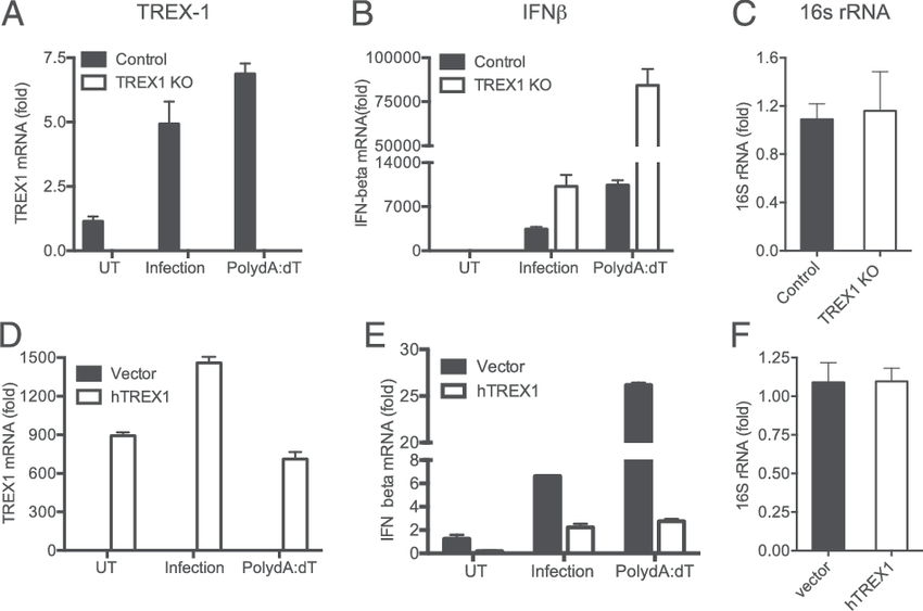 IFN-b expression during chlamydial infection is elevated