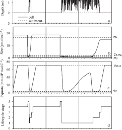 history of an individual anabaena cell lineage solid line a depth [ 850 x 1031 Pixel ]