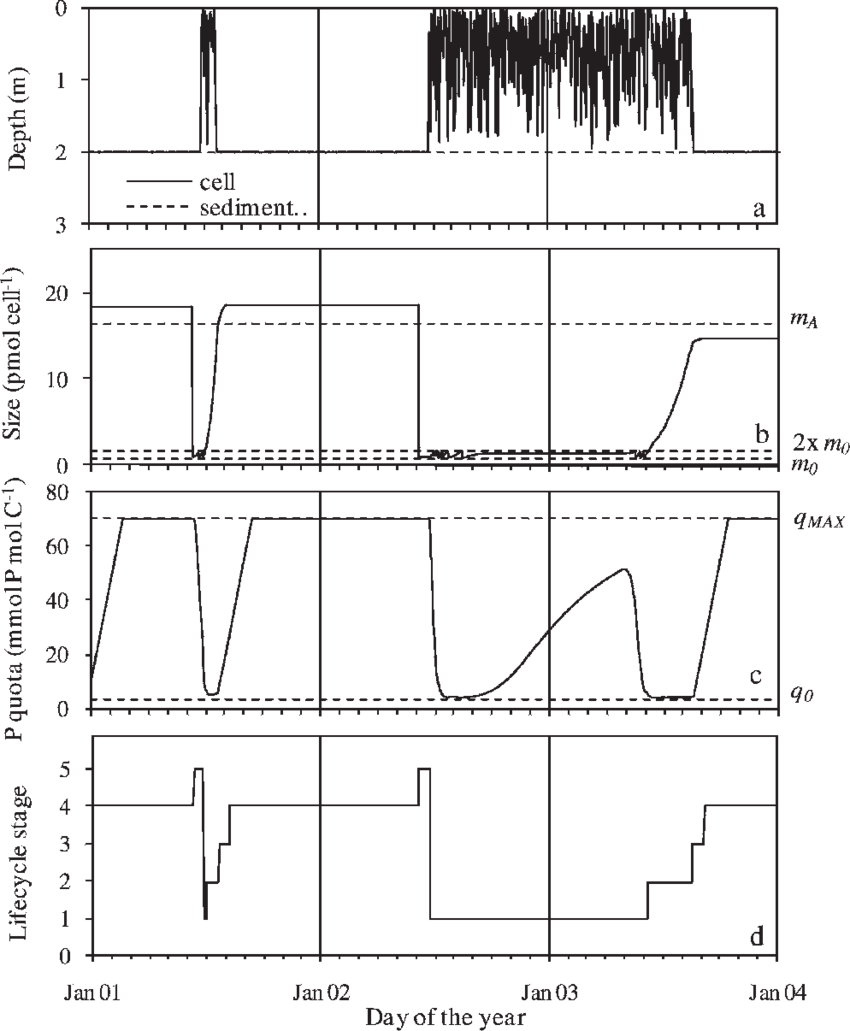 medium resolution of history of an individual anabaena cell lineage solid line a depth