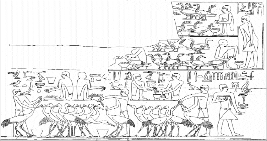 Captive Geese and Cranes feed by hand (tomb of Ti in