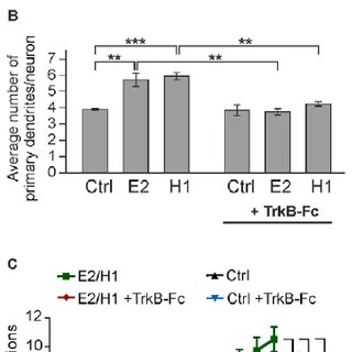 (PDF) Embryonic stem cells stably expressing BDNF-GFP