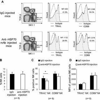 Phenotype of liver natural killer cells under starvation