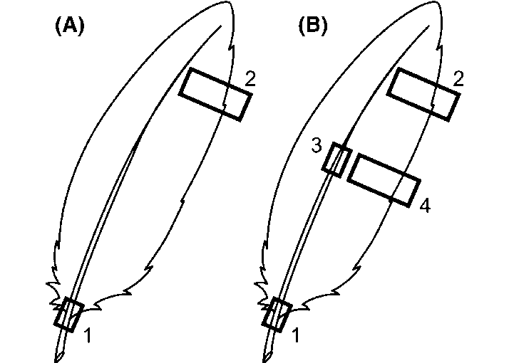 Feather sampling protocols for a broad-billed prion and b