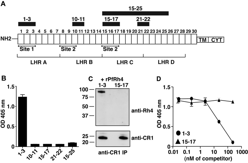 PfRh4 interacts with the N-terminal 3 CCPs of CR1. (A